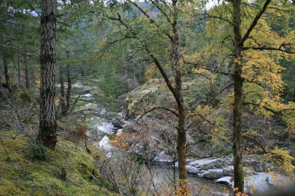 sooke_river_forest_1049.jpg